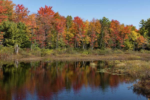 Photograph - Fall Foliage Lakeshore -  by Georgia Mizuleva