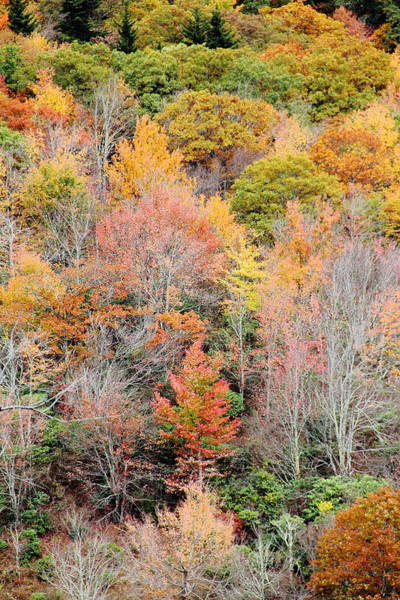 Photograph - Fall Foliage On The Mountain by Allen Nice-Webb