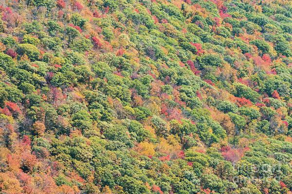 Catskills Photograph - Fall Foliage by Zawhaus Photography