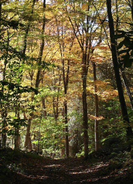 Photograph - Fall Forest 2 by William Selander