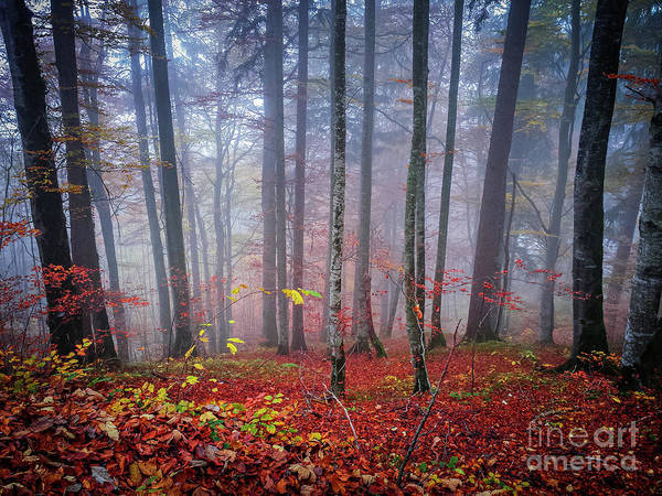 Wall Art - Photograph - Fall Forest In Fog by Elena Elisseeva