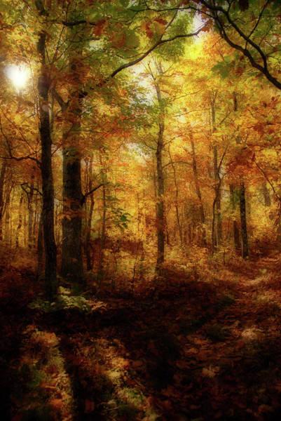 Wall Art - Photograph - Fall Forest by Sarah-jane Laubscher