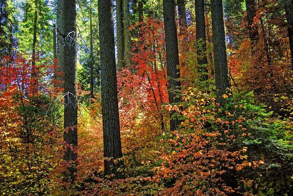 Photograph - Fall Forest Splendor by Lynn Bauer