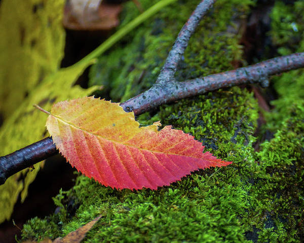 Wall Art - Photograph - Fall From Grace by Bill Pevlor