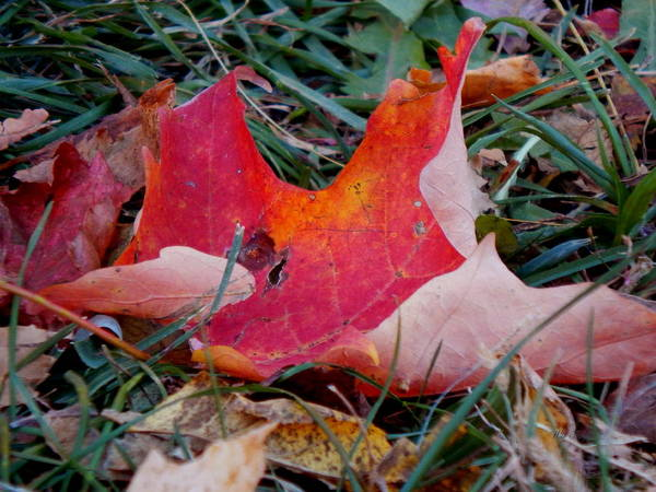 Photograph - Fall From Grace by Wild Thing