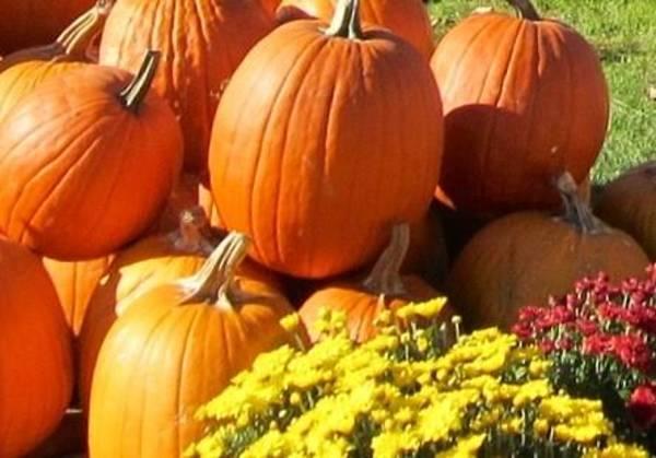Pumkin Wall Art - Photograph - Fall Harvest by G Berry