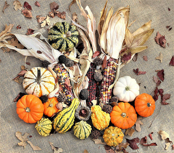 Photograph - Fall Harvest by Sheila Brown