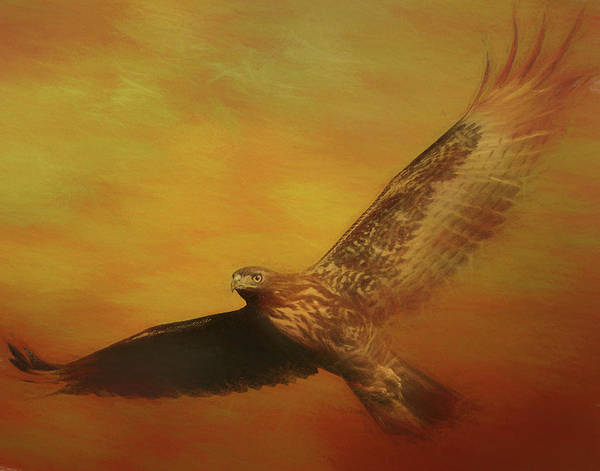 Photograph - Fall Hawk by Gloria Anderson