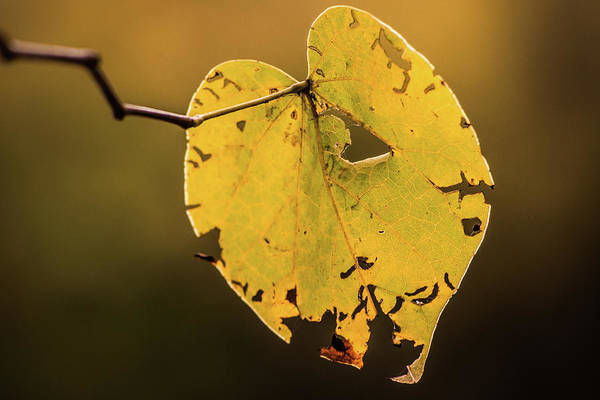 Photograph - Fall Holdout by Michael Arend