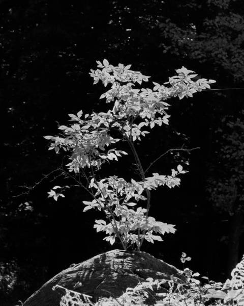 Photograph - Fall Illumination In B/w by William Selander