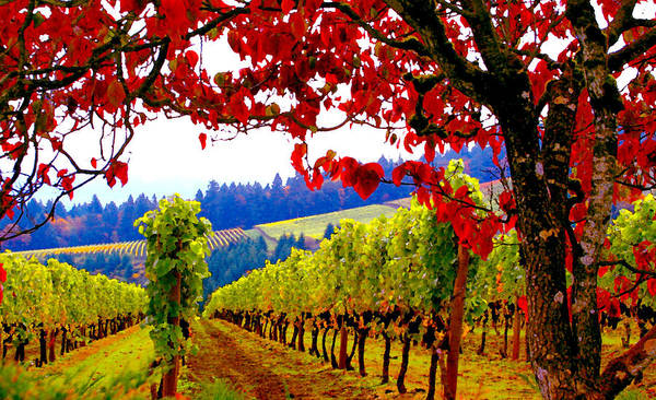 Wine Tasting Photograph - Fall In Dundee by Margaret Hood