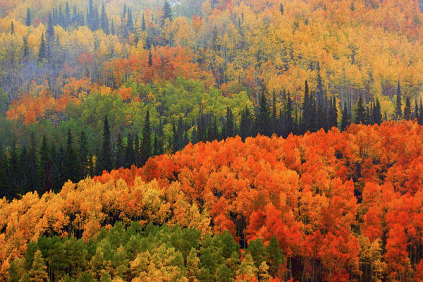 Photograph - Fall In Gunnison National Forest  by John De Bord