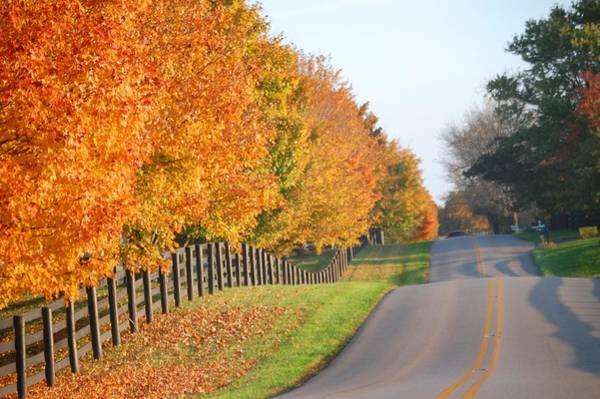 Photograph - Fall In Horse Farm Country by Sumoflam Photography