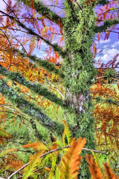 Photograph - Fall In The Florida Panhandle by JC Findley