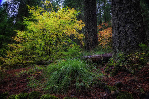 Wall Art - Photograph - Fall In The Forest by Cat Connor
