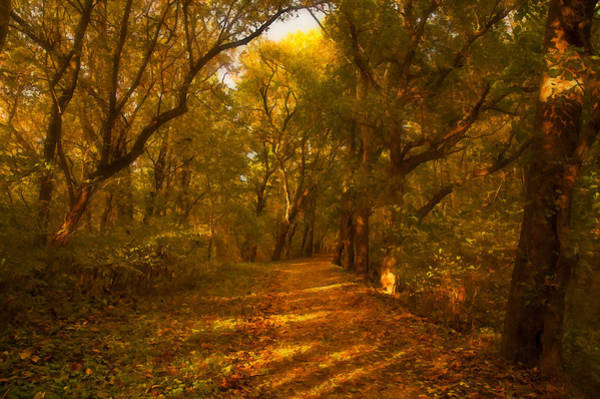 Photograph - Fall In The Forest by Mick Burkey