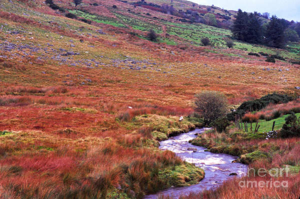 Photograph - Fall In The Sperrin Mountains by Thomas R Fletcher