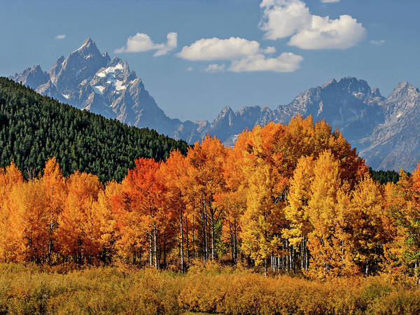 Photograph - Fall In The Tetons by Wesley Aston
