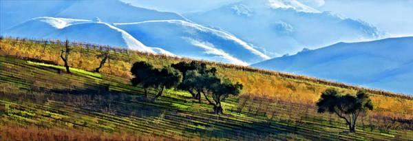California Oak Digital Art - Fall In The Vineyard by Patricia Stalter