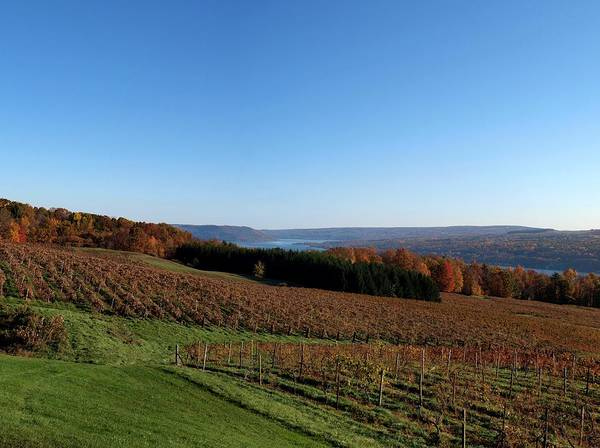 Photograph - Fall In The Vineyards by Joshua House