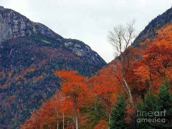 Photograph - Fall In The White Mountains by Marcia Lee Jones