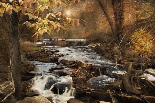 Photograph - Fall In The Woodland by Robin-Lee Vieira