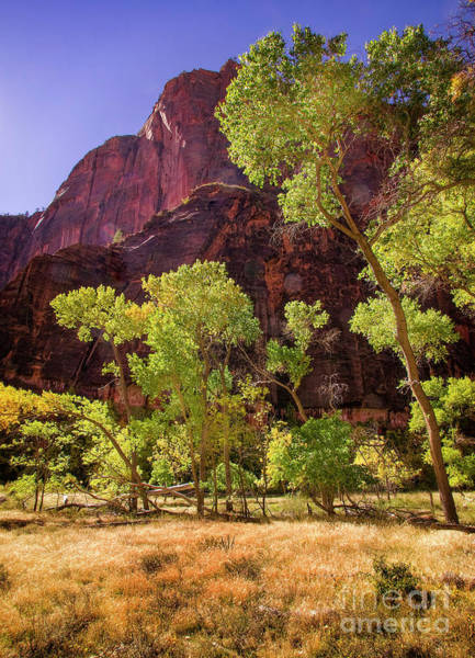 Photograph - Fall In Zion by Scott Kemper