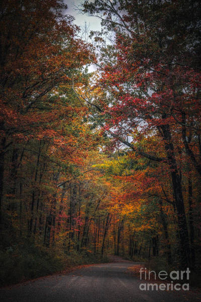 Photograph - Fall  by Larry McMahon