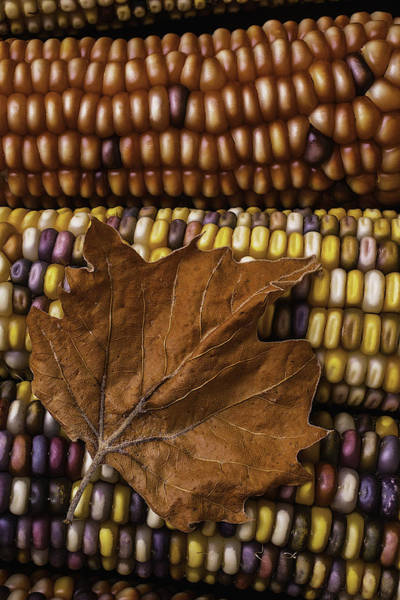 Indian Corn Photograph - Fall Leaf And Indian Corn by Garry Gay