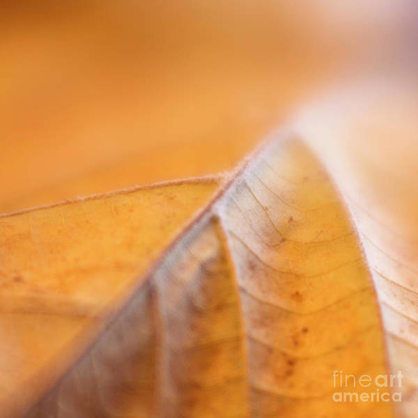 Photograph - Fall Leaf by Elena Nosyreva