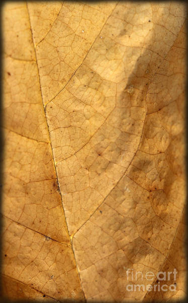 Photograph - Fall Leaf Macro by Karen Adams