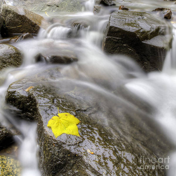 Wall Art - Photograph - Fall Leaf by Twenty Two North Photography