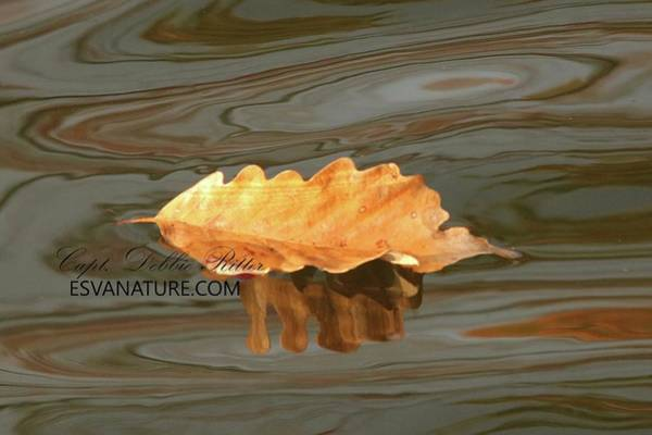 Photograph - Fall Leafs 1437 by Captain Debbie Ritter