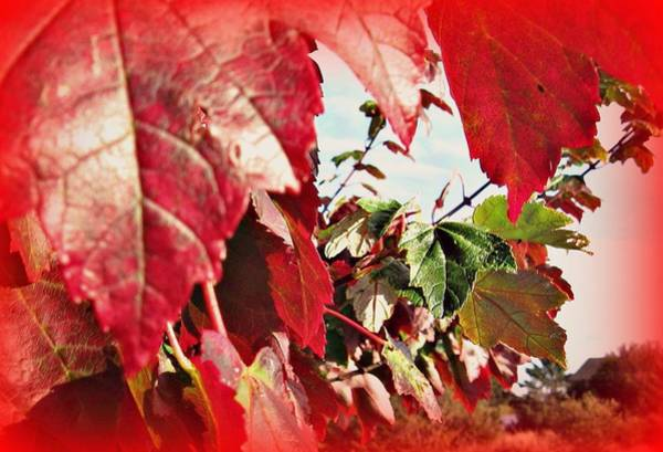 Photograph - Fall Leaves #10 by Anne Westlund