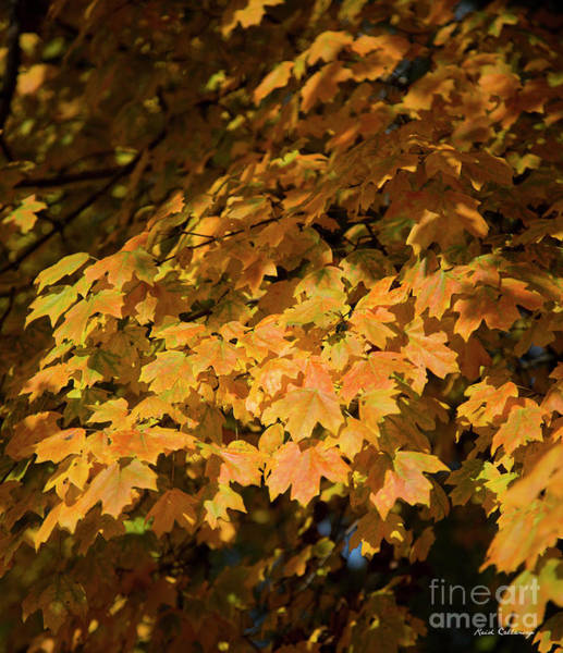 Photograph - Fall Leaves 10 Autumn Leaf Colors Art by Reid Callaway