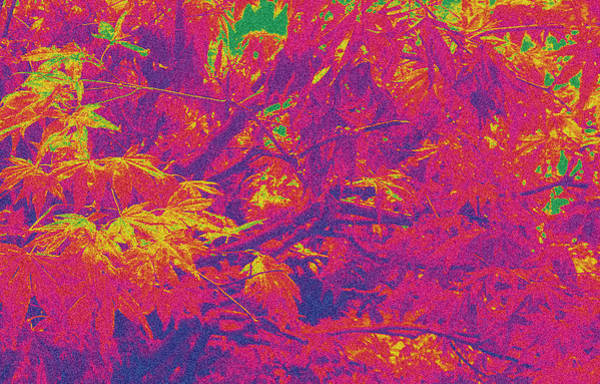 Fall Leaves #14 Art Print