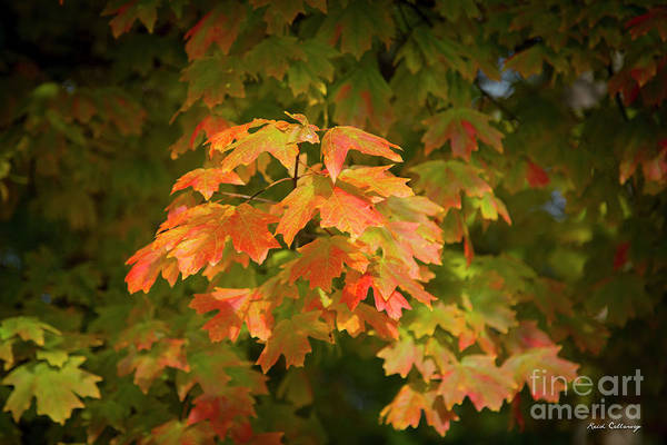Photograph - Fall Leaves 12 Autumn Leaf Colors Art by Reid Callaway