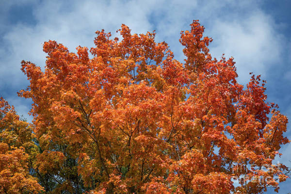 Photograph - Fall Leaves 15 Autumn Leaf Colors Art by Reid Callaway