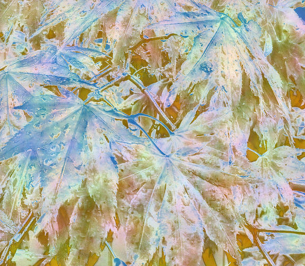 Photograph - Fall Leaves #16 by Anne Westlund