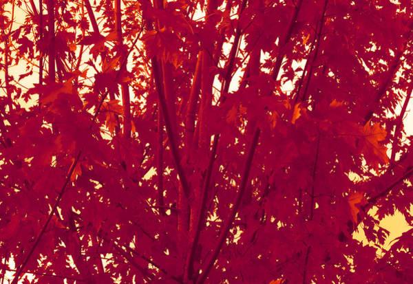 Fall Leaves #2 Art Print