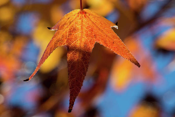 Wall Art - Photograph - Fall Leaves 2 by Kevin O'Hare