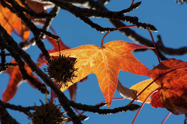 Wall Art - Photograph - Fall Leaves 3 by Kevin O'Hare