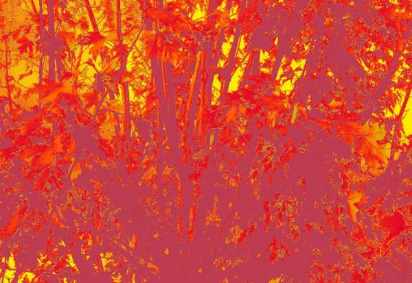 Fall Leaves #4 Art Print
