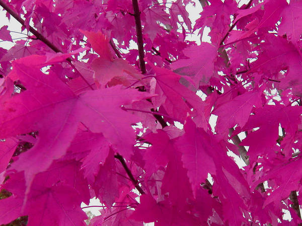 Photograph - Fall Leaves #5 by Anne Westlund