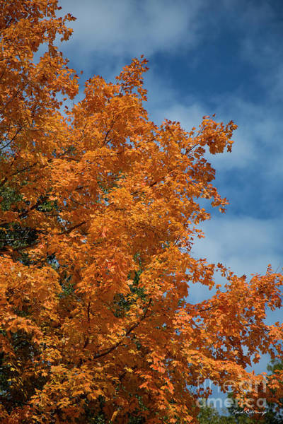 Photograph - Fall Leaves 6 Autumn Leaf Colors Art by Reid Callaway