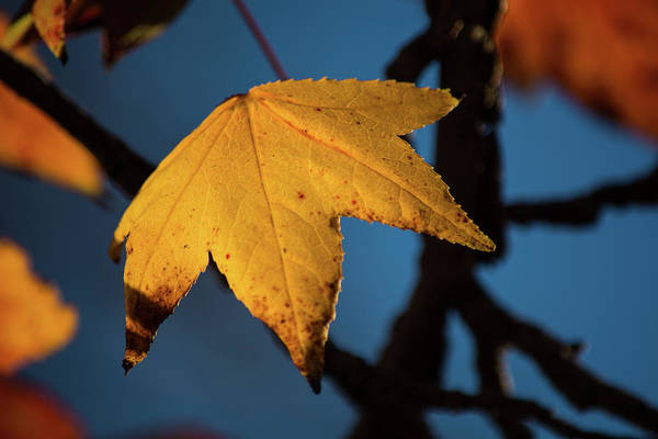 Wall Art - Photograph - Fall Leaves 7 by Kevin O'Hare