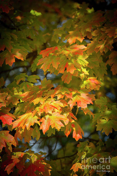 Photograph - Fall Leaves 7 Autumn Leaf Colors Art by Reid Callaway