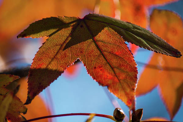 Wall Art - Photograph - Fall Leaves 8 by Kevin O'Hare