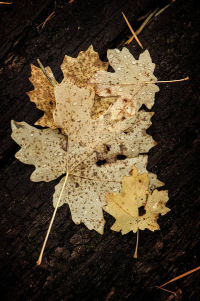 Photograph - Fall Leaves After The Rain by Teresa Wilson