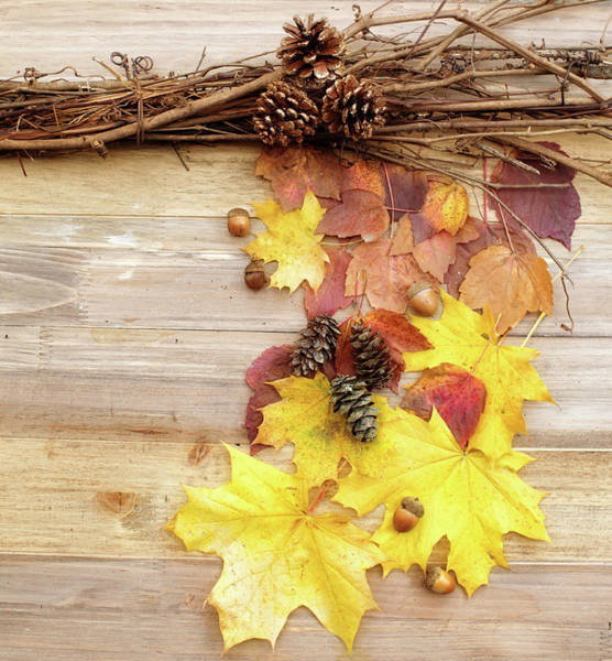Pine Cones Photograph - Fall Leaves And Branches by Rebecca Cozart
